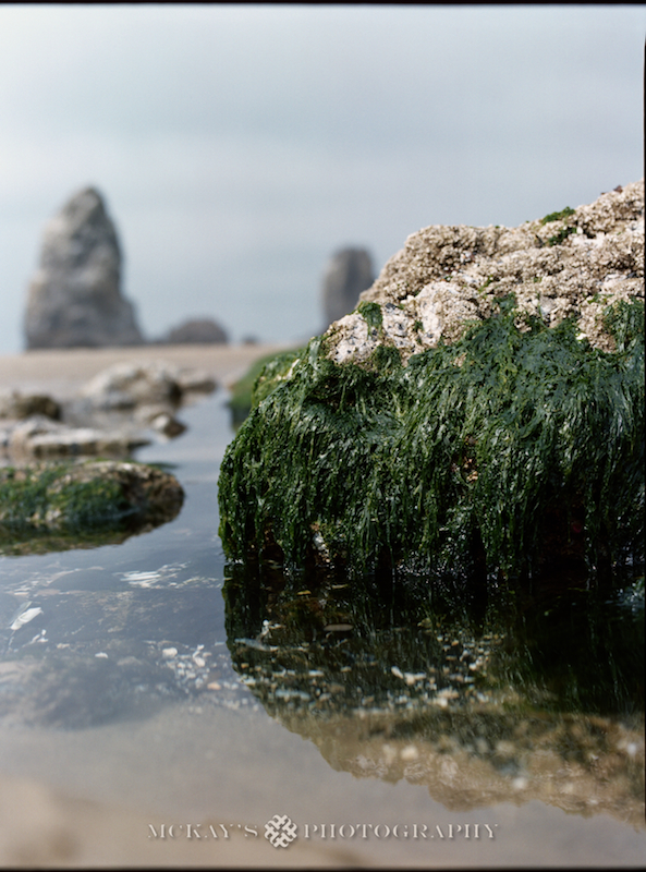 fine art film photography of the Oregon Coast