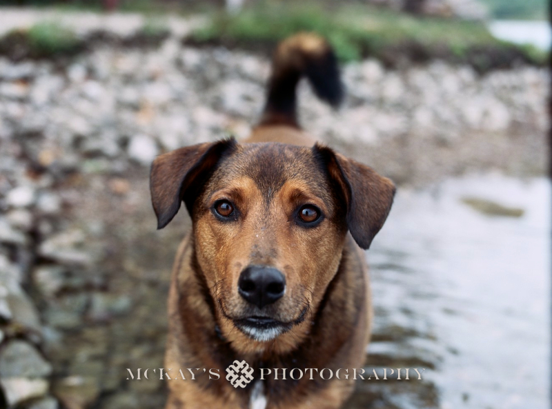 fine art family and dog photographers who shoot film